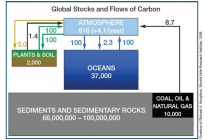 Kohlenstoff - Vorräte, Budget